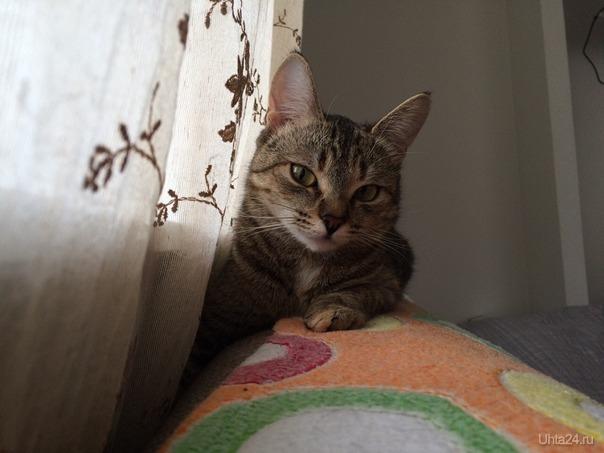 Фортуна, очень умная кошка.  Ухта