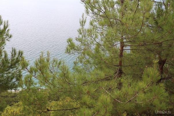 Абхазия. г. Гагра. Вид с дачи Сталина на черное море Мир глазами ухтинцев Ухта