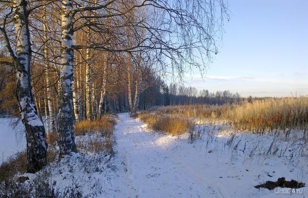 Глубокая осень. Берег Ухты (Шудаяг)  Ухта