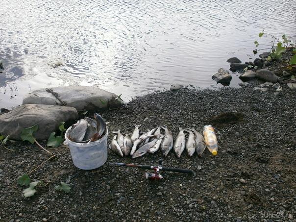 рыбалка на часок Природа Ухты и Коми Ухта