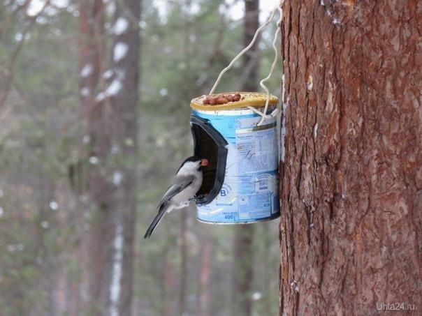 Птичка и орех.  Ухта