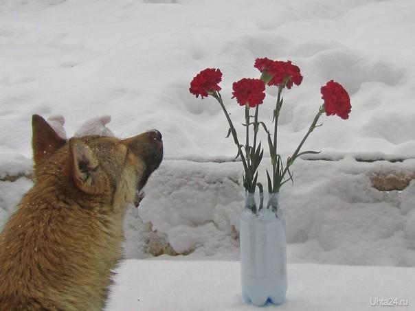 Понравились цветочки Питомцы Ухта