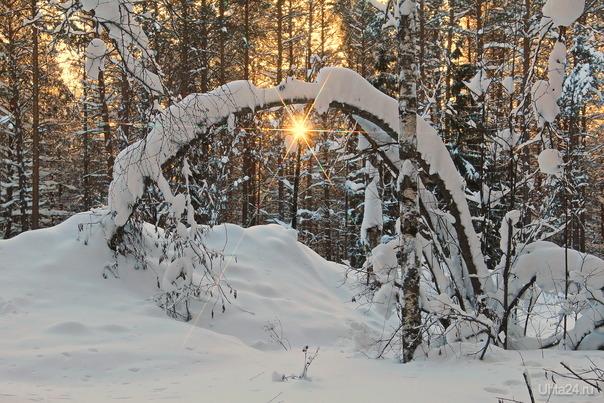 Иду за солнцем следом... Природа Ухты и Коми Ухта