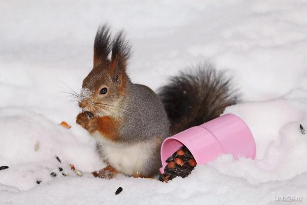 Обед на снегу Природа Ухты и Коми Ухта
