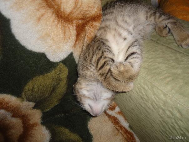 Сон малыша очень крепкий...  Ухта