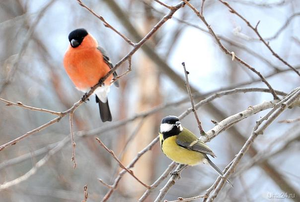 Птички мои Природа Ухты и Коми Ухта