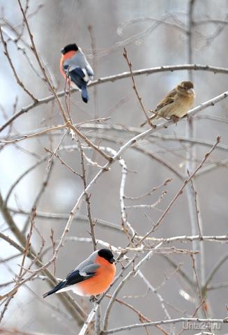 """Может в альбом """"Питомцы""""? Всю зиму их кормлю. Природа Ухты и Коми Ухта"""