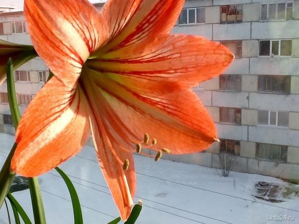 Весна на окне  Ухта