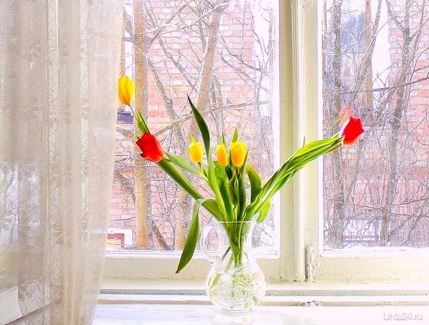 Тюльпаны на подоконнике. Разное Ухта