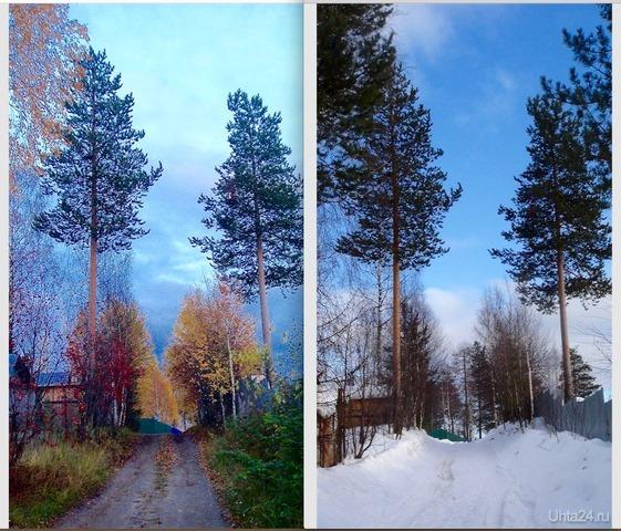 "Из альбома ""Времена года"". Осень - зима. Природа Ухты и Коми Ухта"