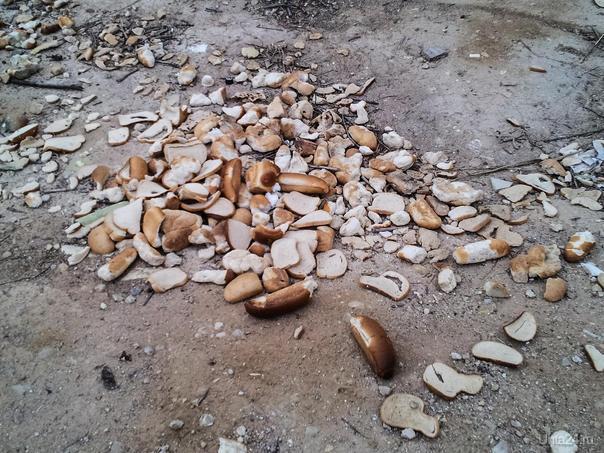 Хлеб голодным.Израиль,март 2017г. Мир глазами ухтинцев Ухта