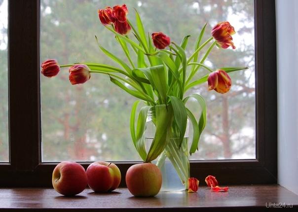 Натюрморт с тюльпанами и яблоками  Ухта