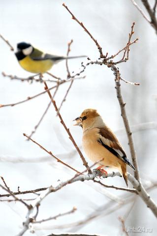Новый гость Природа Ухты и Коми Ухта