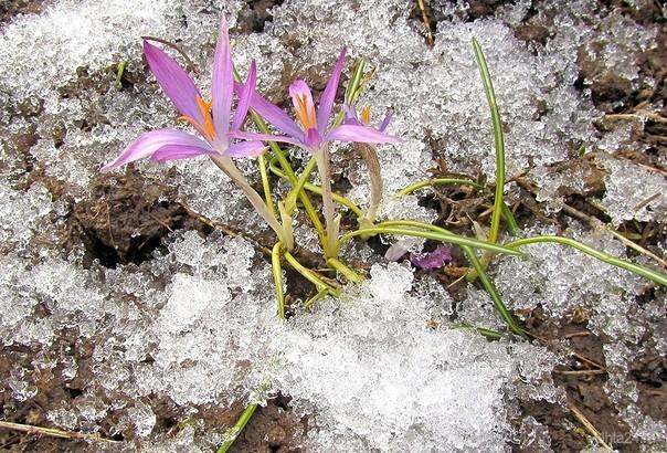 Первоцветы. Майское фото. Разное Ухта
