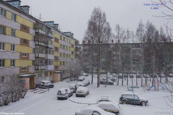 И последствия майской метели - чистое белое покрывало, как в декабре :-) Зима настырная попалась в этом году) P.S. Опять же для фотодневника погоды.  Ухта