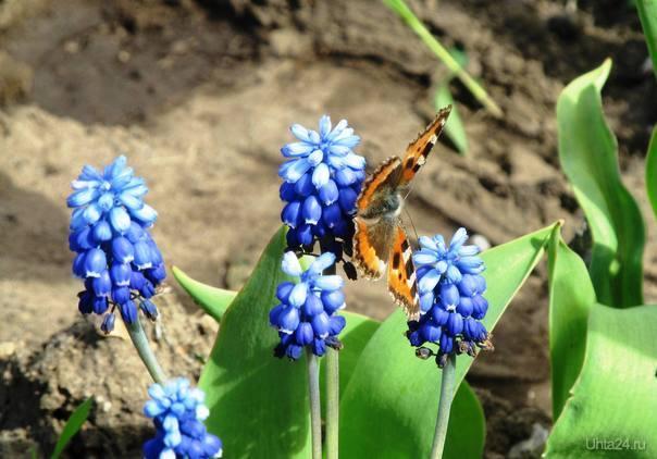 майского жука не смог поймать, покажте кто нибудь Природа Ухты и Коми Ухта