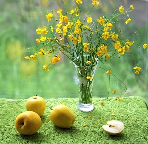Натюрморт с желтыми цветами и яблоками  Ухта