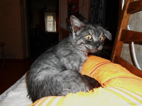 Изрядно ощипанный, но не побеждённый (после игры с бенгальским котом)  Ухта