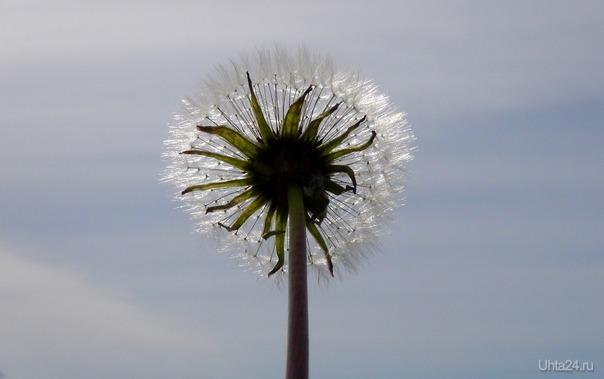 Летающий цветок. Природа Ухты и Коми Ухта