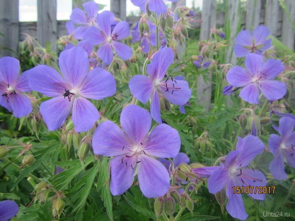 Просто красивые цветы.  Ухта