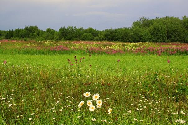Это наши цветы  Ухта