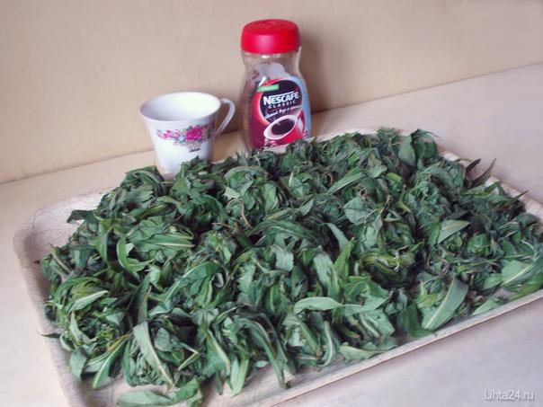 Прочитала о пользе кипрея и решила заготовить чай. Листья приготовила к ферментизации.  Ухта