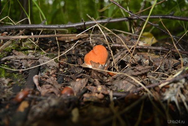 Первый грибочек Природа Ухты и Коми Ухта
