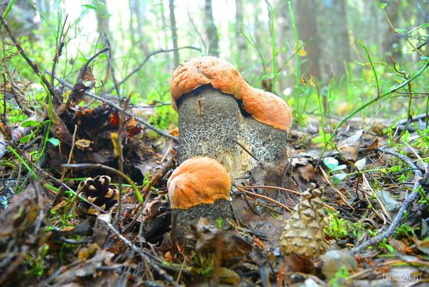 Классно в лесу! Природа Ухты и Коми Ухта