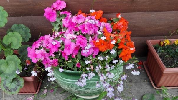 Цветочки на даче Природа Ухты и Коми Ухта