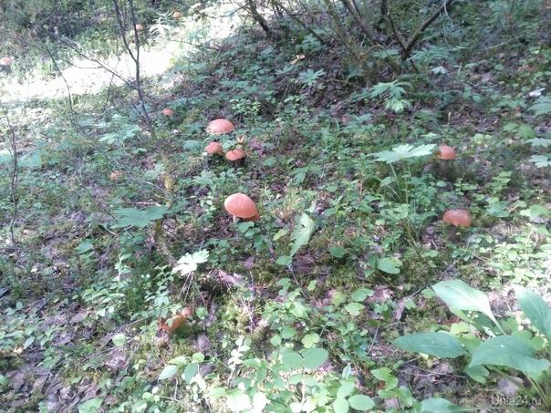 Сколько грибов на фото? Природа Ухты и Коми Ухта