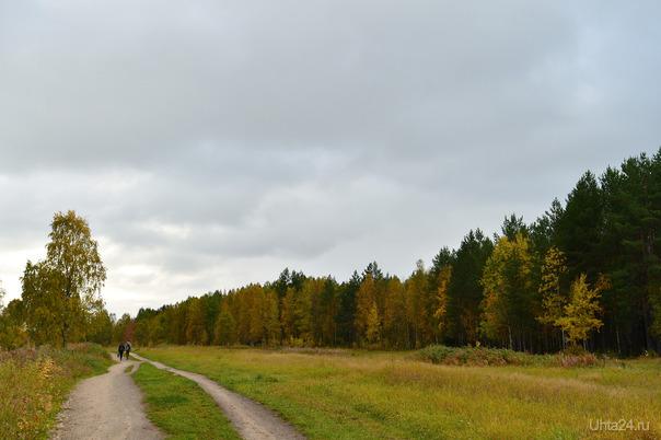 Вот и осень пришла, отцвела капуста... Природа Ухты и Коми Ухта