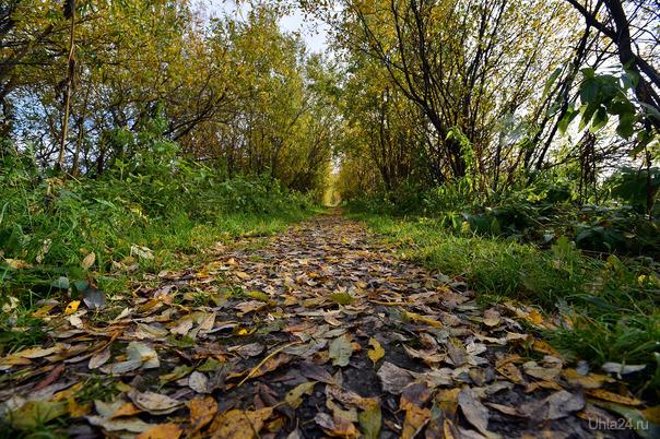 На ковре из желтых листьев Природа Ухты и Коми Ухта