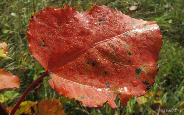 Осенний лист Разное Ухта
