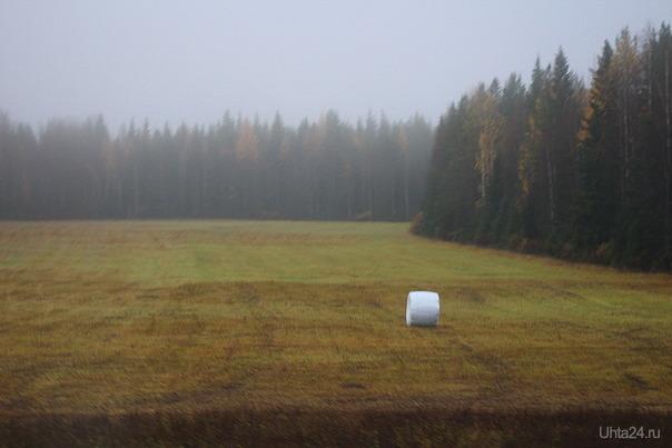 Сегодняшний туман по дороге Ухта-Сыктывкар Природа Ухты и Коми Ухта