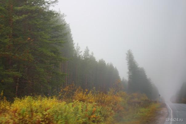 6 утра по дороге на Сыктывкар Природа Ухты и Коми Ухта