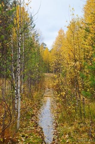 желтой краской кто то                  выкрасил леса                          стали отчего-то                        ниже небеса                         я спросил у папы:                                      -что случилось вдруг?                и ответил папа:                        -это осень друг. Природа Ухты и Коми Ухта