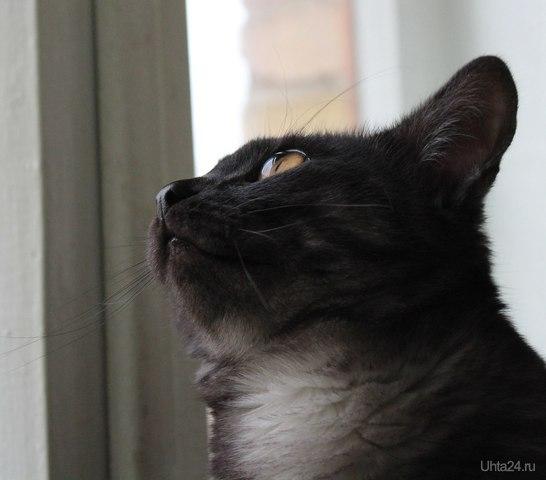 БОНЯ (кот моей сеструльки) Питомцы Ухта