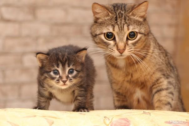 дочь и мать Питомцы Ухта