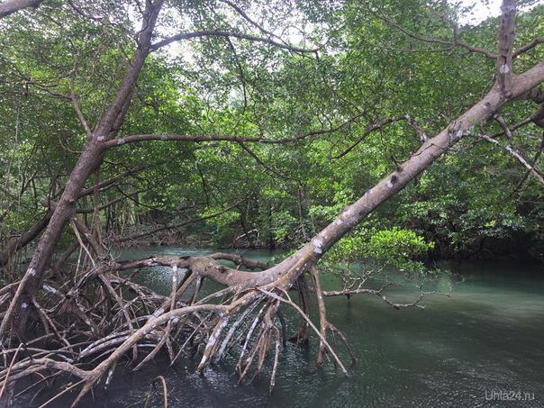 Доминиканская республика, на пути к острову Самана Мир глазами ухтинцев Ухта
