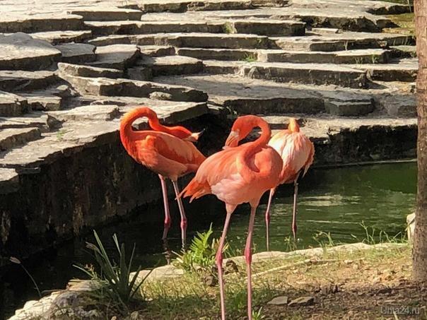Доминиканская республика, розовый фламинго Мир глазами ухтинцев Ухта