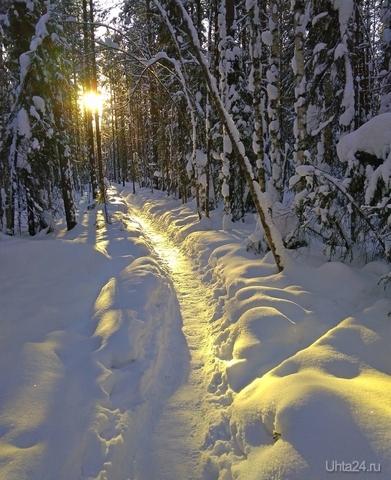Тропинка к солнцу Природа Ухты и Коми Ухта