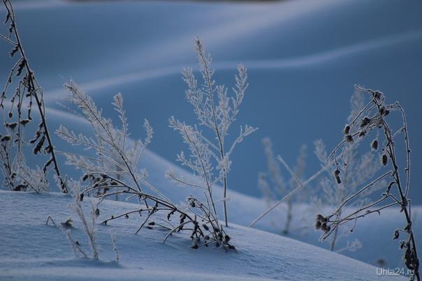 Зимняя сказка Природа Ухты и Коми Ухта