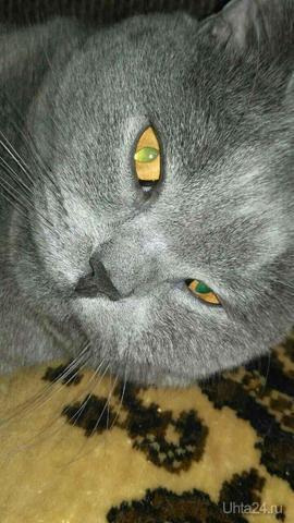 мой кот Питомцы Ухта