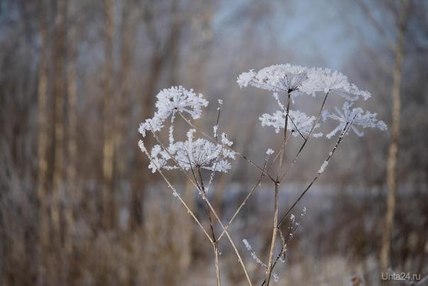 Иней на траве Природа Ухты и Коми Ухта