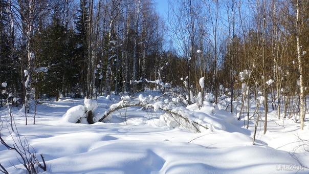 Снежная красота. Природа Ухты и Коми Ухта