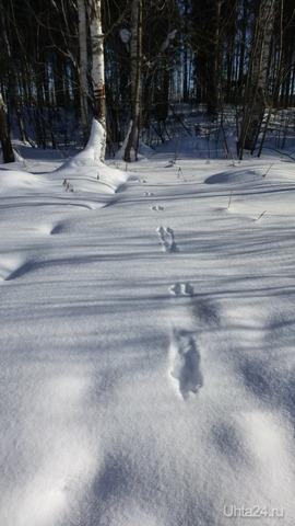 Чьи следы на снегу? Природа Ухты и Коми Ухта