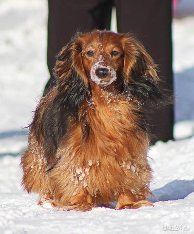 Хозяйка сказала что собака не фотогенична!!!!  Ухта