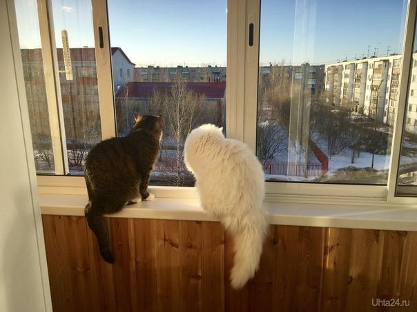 Весна. Котейки торжествуют! И на балконе обновляют променад!) Питомцы Ухта