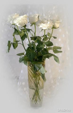 Белые розы Разное Ухта