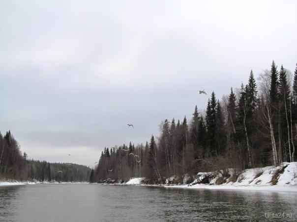 лебеди летят Природа Ухты и Коми Ухта